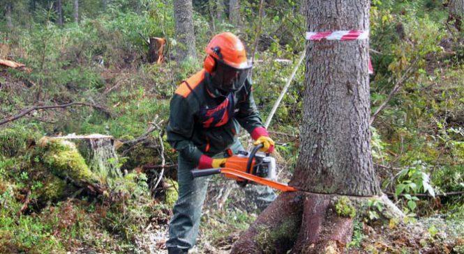 Услуги по удалению деревьев в Московской области